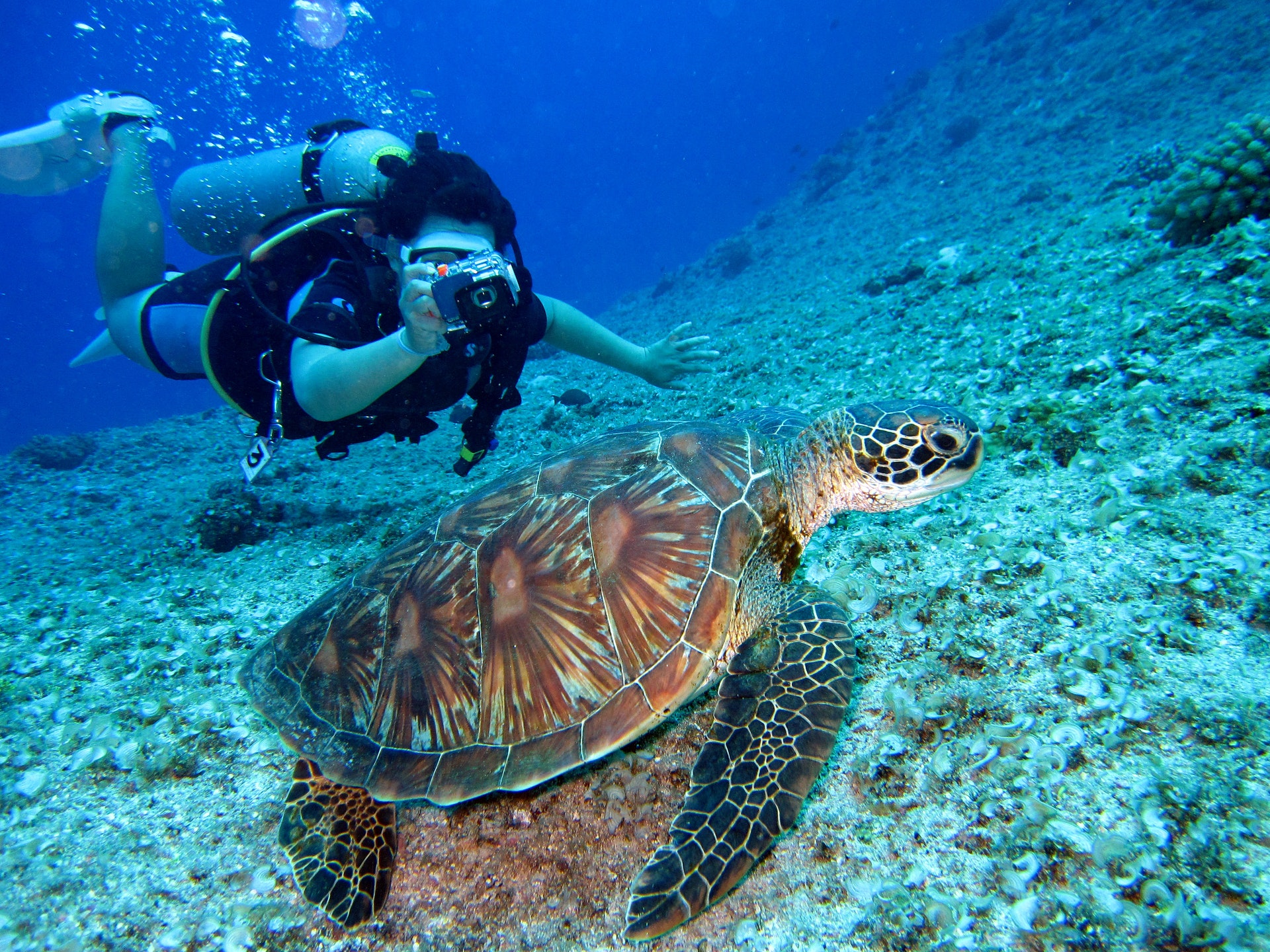 5 Items You Need to Buy Before Your First Scuba Trip